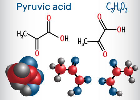 Pyruvic acid (pyruvate) molecule. It is the simplest of the alpha-keto acids. Structural chemical formula and molecule model. Vector illustration Illustration