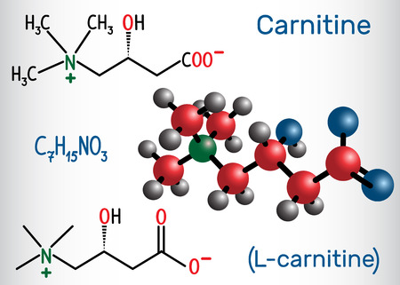 Carnitine (L-carnitine) molecule. Structural chemical formula and molecule model. Vector illustration Ilustração
