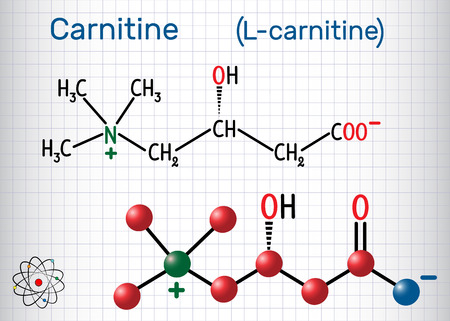 Carnitine (L-carnitine) molecule. Structural chemical formula and molecule model. Sheet of paper in a cage. Vector illustration Illustration