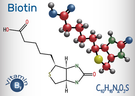 Biotin (vitamin B7). Structural chemical formula and molecule model. Vector illustration   Illustration