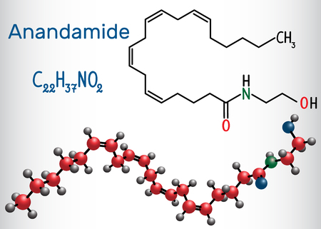 Anandamide molecule. It is endogenous cannabinoid neurotransmitter. Structural chemical formula and molecule model. Vector illustration