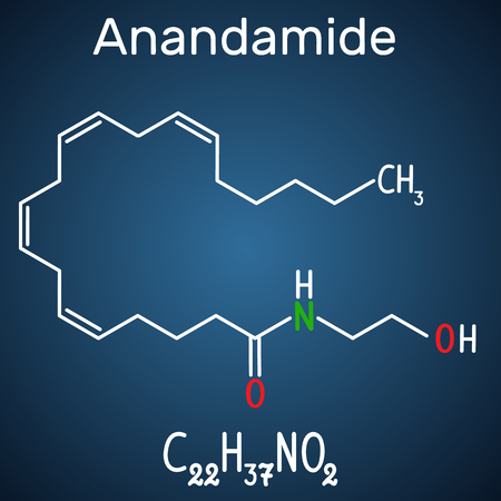 Anandamide molecule. It is endogenous cannabinoid neurotransmitter. Structural chemical formula and molecule model on the dark blue background. Vector illustration Illustration