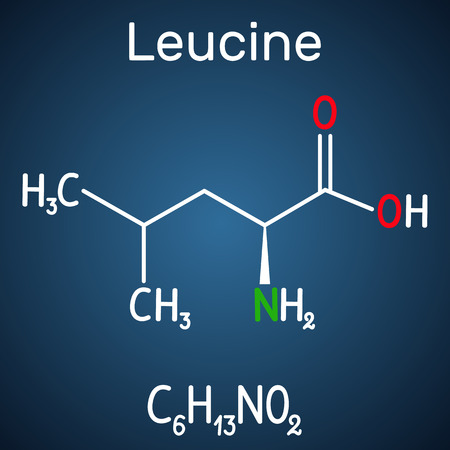 Leucine ( L- leucine,  Leu,  L)  molecule. It is essential amino acid.  Structural chemical formula on the dark blue background. Vector illustration