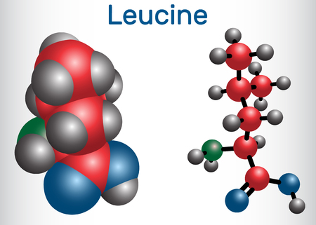 Leucine ( L- leucine, Leu, L) molecule. It is essential amino acid. Molecule model. Vector illustration