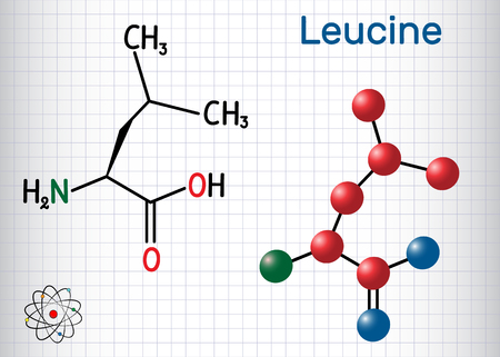 Leucine ( L- leucine,  Leu,  L)  molecule. It is essential amino acid. Sheet of paper in a cage. Structural chemical formula and molecule model. Vector illustration Vectores