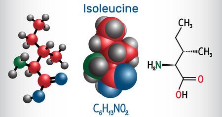 Isoleucine (L-isoleucine , Ile, I) molécule d'acide aminé. Il est utilisé dans la biosynthèse des protéines. Formule chimique structurale et modèle de molécule. Illustration vectorielle