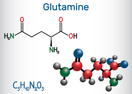 Glutamine (Gln , Q) amino acid molecule.  Structural chemical formula and molecule model. Vector illustration