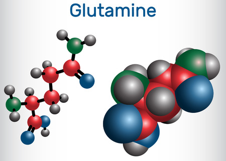 Glutamine (Gln , Q) amino acid molecule.  Structural chemical formula and molecule model. Vector illustration
