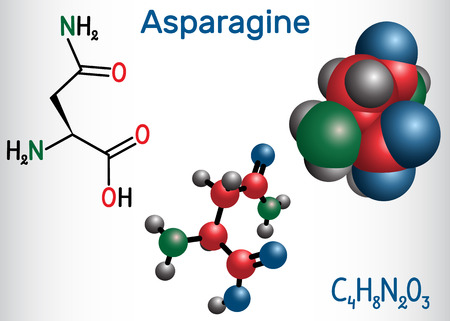 Asparagine (L-asparagine , Asn, N) amino acid molecule. It is is used in the biosynthesis of proteins.  Structural chemical formula and molecule model. Vector illustration