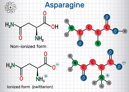 Asparagine (L-asparagine , Asn, N) amino acid molecule. Ionized and non-ionized (zwitterion) forms. Structural chemical formula and molecule model. Sheet of paper in a cage. Vector illustration