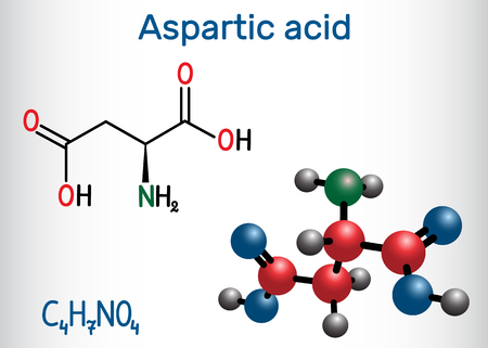 Aspartic acid (L- aspartic acid, Asp, D, aspartate) proteinogenic amino acid molecule.  Structural chemical formula and molecule model. Vector illustration Illustration