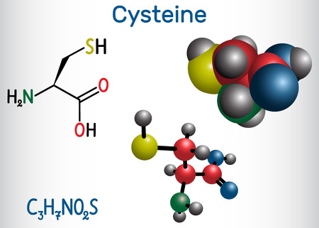 Cysteine  (L-cysteine, Cys, C) proteinogenic amino acid molecule.  Structural chemical formula and molecule model. Vector illustration
