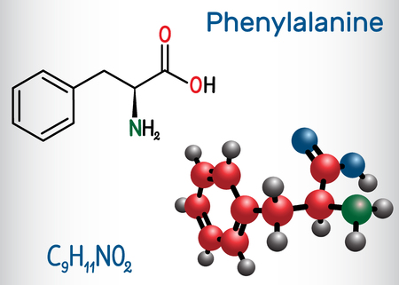 Phenylalanine (L-phenylalanine, Phe , F) amino acid molecule.  Structural chemical formula and molecule model. Vector illustration