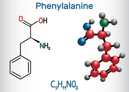 Phenylalanine (L-phenylalanine, Phe , F) amino acid molecule. Structural chemical formula and molecule model. Vector illustration