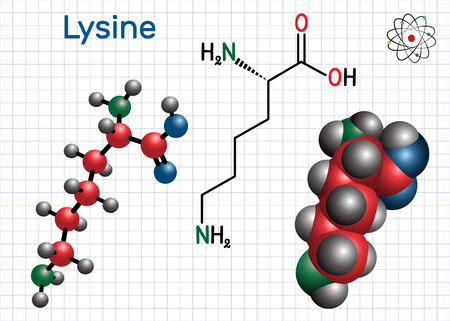 Lysine (L- lysine , Lys, K) amino acid molecule. It is used in the biosynthesis of proteins. Sheet of paper in a cage. Structural chemical formula and molecule model. Vector illustration Ilustração