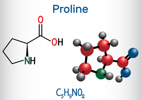 Proline L- proline, Pro , P proteinogenic amino acid molecule. Structural chemical formula and molecule model. Vector illustration