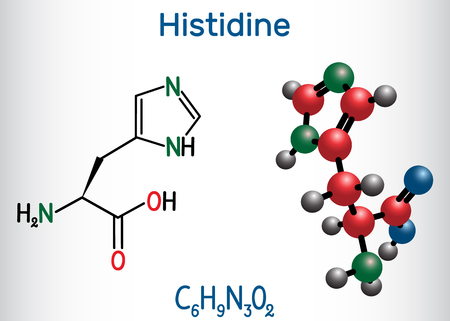 Histidine L- histidine , His, H amino acid molecule. It is used in the biosynthesis of proteins. Structural chemical formula and molecule model. Vector illustration