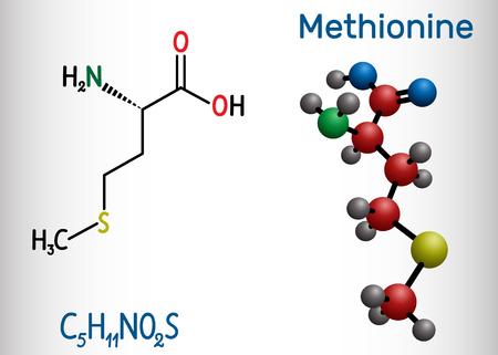 Methionine l- methionine, Met , M essential amino acid molecule. Structural chemical formula and molecule model. Vector illustration Ilustração
