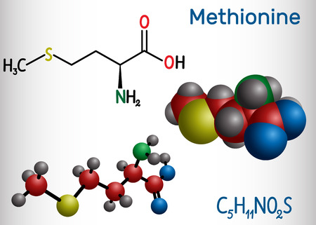 Methionine l- methionine, Met , M essential amino acid molecule. Structural chemical formula and molecule model. Vector illustration