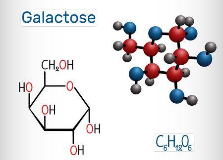 Galactose, alpha-D-galactopyranose, milk sugar molecule. Cyclic form. Structural chemical formula and molecule model. Vector illustration