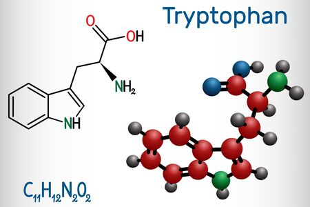 Tryptophan, Trp or W amino acid molecule, is used in the biosynthesis of proteins. It is necessary for growth in infants and for nitrogen balance in adults. Structural chemical formula and molecule model. Vector illustration Ilustração