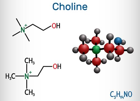 Choline vitamin-like essential nutrien molecule. It is a constituent of lecithin. Structural chemical formula and molecule model. Vector illustration