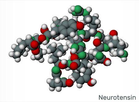 Neurotensin, 13 amino neuropeptide molecule. Scale model. 3D rendering Reklamní fotografie