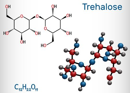 Trehalose, tremalose carbohydrate molecule. Also known as mycose. Is a disaccharide consisting of two molecules of glucose.  Structural chemical formula and molecule model. Vector illustration