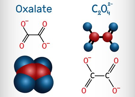 Oxalate anion, ethanedioate molecule.  Structural chemical formula and molecule model. Vector illustration