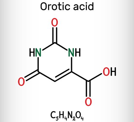 Orotic acid molecule. It is a pyrimidinedione and a carboxylic acid.  Skeletal chemical formula. Illustration