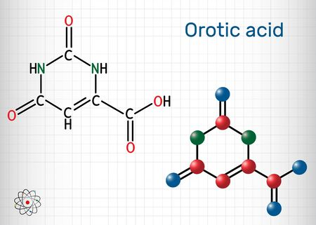 Orotic acid molecule. It is a pyrimidinedione and a carboxylic acid.  Structural chemical formula and molecule model. Sheet of paper in a cage. Vector illustration