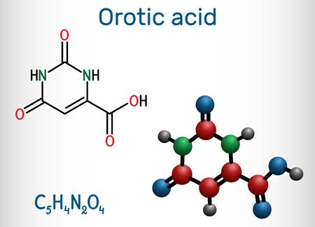 Orotic acid molecule. It is a pyrimidinedione and a carboxylic acid.  Structural chemical formula and molecule model