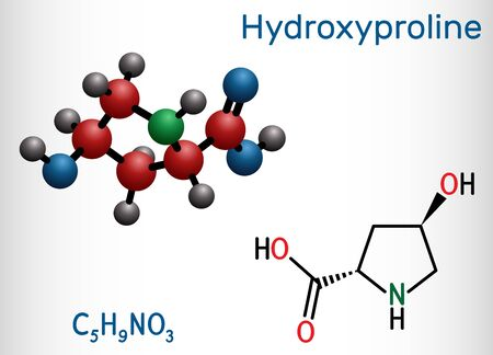 Hydroxyproline , Hyp, C5H9NO3 molecule. It is is a common proteinogenic amino acid and a major component of the protein collagen. Structural chemical formula and molecule model. Vector illustration