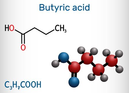Butyric acid, butanoic acid molecule. Butyrates or butanoates are salts and esters. Structural chemical formula and molecule model. Vector illustration