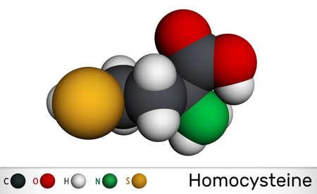 Homocysteine biomarker molecule. It is a sulfur-containing non-proteinogenic amino acid. Molecular model. 3D rendering