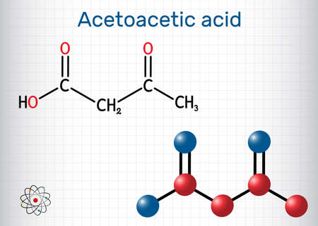 Acetoacetic acid, diacetic, oxobutanoic acid molecule. It is a ketone body, conjugate acid of an acetoacetate. Structural chemical formula and molecule model. Sheet of paper in a cage. Vector illustration