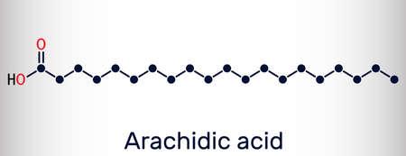 Arachidic acid, eicosanoic, icosanoic acid molecule. It is saturated long-chain fatty acid. Skeletal chemical formula. Vector illustration