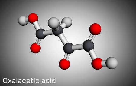 Oxaloacetic acid, oxalacetic acid, OAA, oxaloacetate molecule. It is oxodicarboxylic acid, metabolic intermediate. Molecular model. 3D rendering. 3D illustration Banque d'images