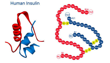 Human Insulin molecule. It is peptide hormone, produced by beta cells of the pancreas, used for the treatment of hyperglycemia. Molecular model. 3D rendering. 3D illustration Banque d'images