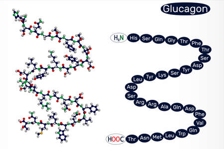 Glucagon molecule. It is 29 amino acid peptide hormone, is used to treat low blood sugar. 3D rendering. 3D illustration Banque d'images