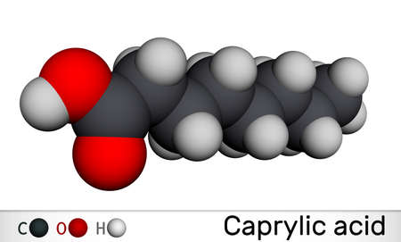 Caprylic acid, octanoic acid molecule. It is straight-chain saturated fatty and carboxylic acid. Salts are known as octanoates or caprylates. Molecular model. 3D rendering. 3D illustration
