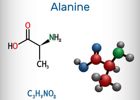 Alanine, L-alanine, Ala, A molecule. It is non-essential amino acid. Structural chemical formula and molecule model. Vector illustration
