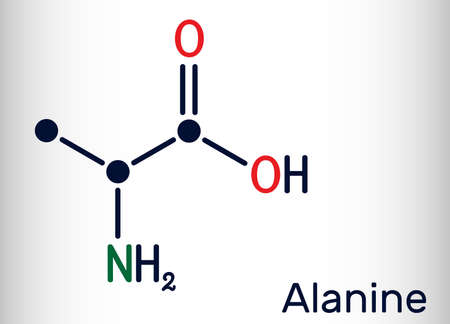 Alanine, L-alanine, Ala, A molecule. It is non-essential amino acid. Structural chemical formula Skeletal chemical formula. Vector illustration