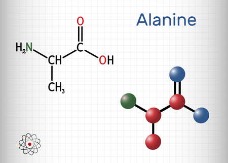 Alanine, L-alanine, Ala, A molecule. It is non-essential amino acid. Structural chemical formula and molecule model. Sheet of paper in a cage. Vector illustration