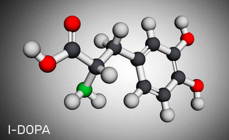 l-DOPA, levodopa molecule. It is an amino acid, is used to increase dopamine concentrations in the treatment of Parkinson's disease. Molecular model. 3D rendering. Illustration