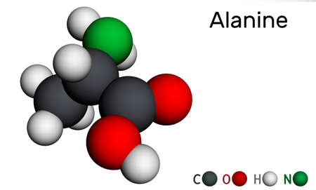 Alanine, L-alanine, Ala, A molecule. It is non-essential amino acid. Molecular model. 3D rendering. 3D illustration Banque d'images