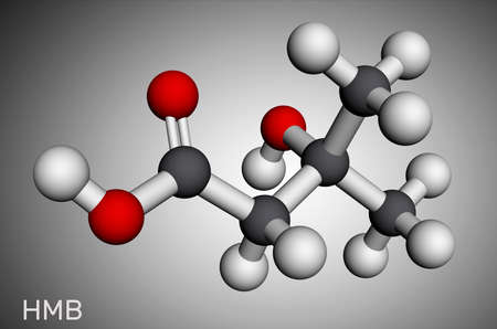 Beta-hydroxy beta-methylbutyric acid, HMB, beta-Hydroxyisovaleric acid molecule. It is indicator of biotin deficiency, leucine metabolite. Molecular model. 3D rendering. Illustration