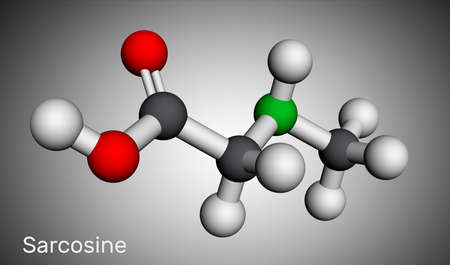Sarcosine, N-methylglycine, N-alkylglycine molecule. It is amino acid derivative, conjugate acid of sarcosinate. Molecular model. 3D rendering. 3D illustration