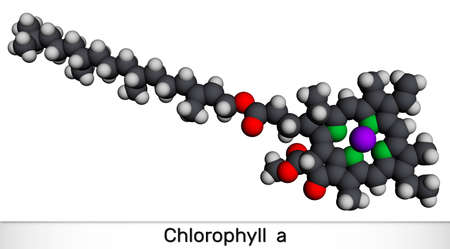 Chlorophyll A, chlorophyll molecule. It is photosynthetic pigment used in oxygenic photosynthesis. Molecular model. 3D rendering. 3D illustration