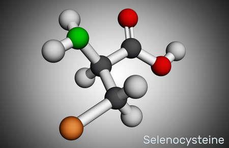 Selenocysteine, L-selenocysteine, Sec, U molecule. It is proteinogenic amino acid, selenium analogue of cysteine, building block of selenoproteins. Molecular model. 3D rendering. 3D illustration Imagens